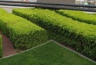 Ainslie ACT Commercial landscaping 1