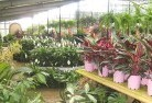 Ainslie ACT Indoor planting 6