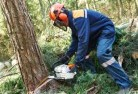 Ainslie ACT Tree felling services 21
