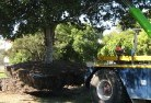 Ainslie ACT Tree felling services 4