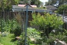 Ainslie ACT Vegetable gardens 12