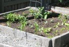Ainslie ACT Vegetable gardens 14