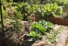Ainslie ACT Vegetable gardens 2