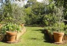 Ainslie ACT Vegetable gardens 3