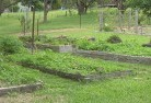 Ainslie ACT Vegetable gardens 5